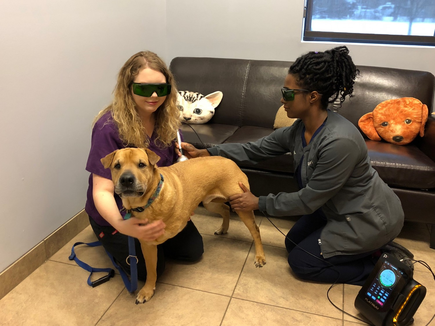 Cary Grove Animal Hospital Cary, IL LASER Therapy